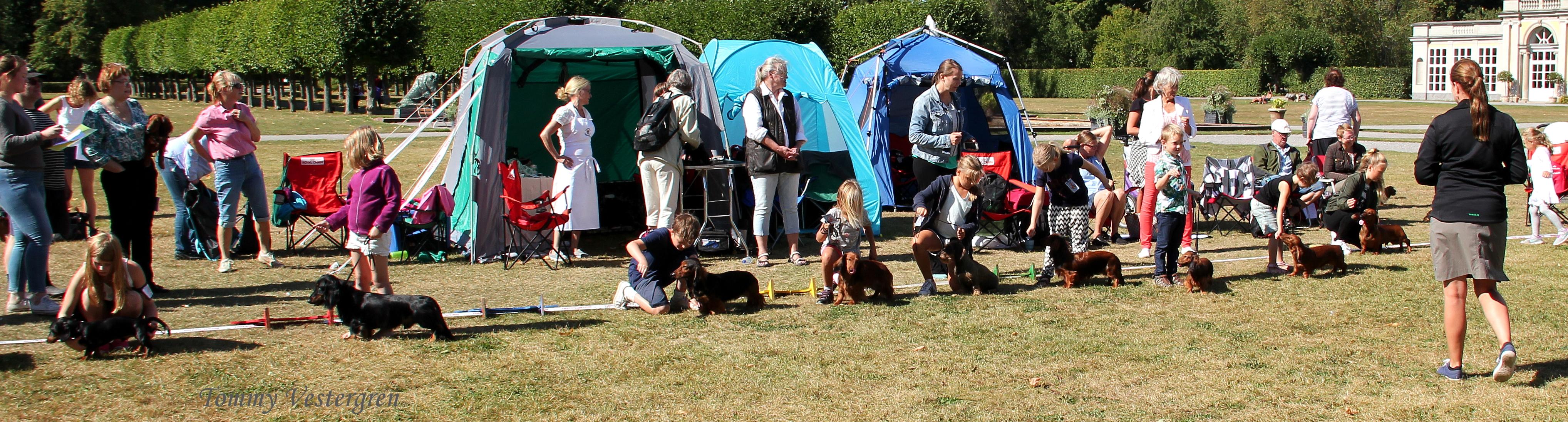 Hela startfältet i Barn Med Hund